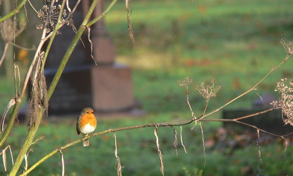 Bird Count 2015